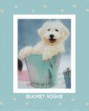 Bucket Vogue