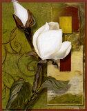 Beautiful Magnolia II