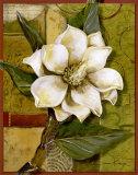 Beautiful Magnolia I