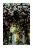 Cascading Roses