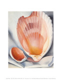 Two Pink Shells  1937