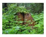 Lost Tree