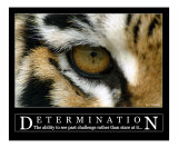 Determination - Siberian Tiger Eye