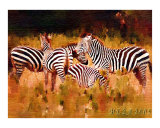 A Small Herd of Zebra