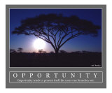 Opportunity - Acacia Tree  Africa