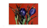 Red Crocus
