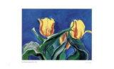 Baroque Tulips