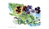 Spring Garden / Pansies