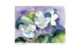 White Violet