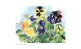 Blue Sky Pansies