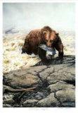 Northwest Legend - Grizzly Bear