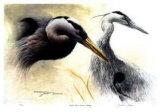 Great Blue Heron Study