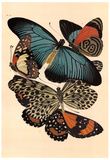 Butterflies I