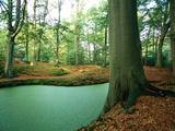 Lake in a Wood