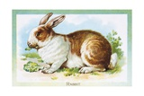 Postcard Depicting a Rabbit Eating Lettuce