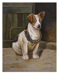 A Misfit Book of Jack Russell Terrier