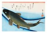 Swimming Carp