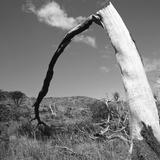 Fallen Branch of a Dead Tree