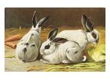 German Postcard Depicting Three Rabbits