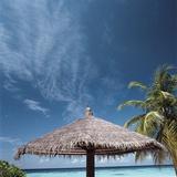 Cabana and Palm Trees