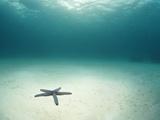 Blue Sea Star in Open Ocean Papier Photo