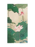 Two Butterflies and Lotuses Giclée par Hsi-Tsun Chang