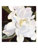 Gardenia Acrylic