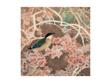 Lifespring - Japanese Blue-winged Pitta