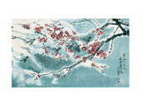 Plum Blossom in Snow
