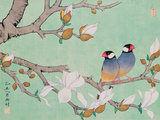 Twin Birds in the Branches Giclée par Hsi-Tsun Chang
