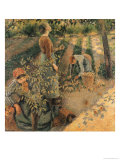 The Apple Pickers  1886