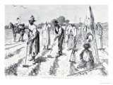 Cotton Culture  Covering the Seed  from &quot;Harper&#39;s Weekly &quot; 24th April 1875