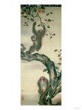 Family of Monkeys in a Tree
