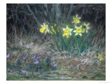 Narcissi and Violets  circa 1867