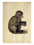 A Monkey