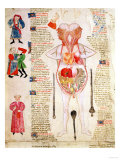 Anatomical Diagram  from &quot;De Arte Phisicali E De Cirurgia&quot; by John Arderne  1412