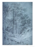Study of Ash and Other Trees (Pencil on Paper  Heightened with White Chalk)