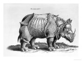 Rhinocerous  No 76 from &quot;Historia Animalium&quot; by Conrad Gesner (1516-65) Published in July 1815