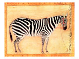 "Zebra  from the ""Minto Album "" Mughal  1621"