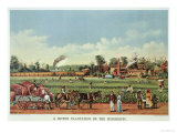 A Cotton Plantation on the Mississippi  the Harvest  1884