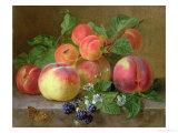 Still Life of Peaches