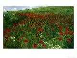 The Poppy Field  1896