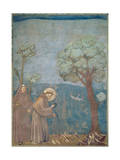 St Francis Preaching to the Birds  1297-99