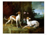 Misse and Turlu  Two Greyhounds of Louis XV
