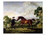 "The Duke of Ancaster's Bay Stallion ""Blank "" Held by a Groom  circa 1762-5"