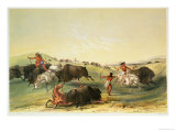 Buffalo Hunt  Plate 7 from Catlin&#39;s North American Indian Collection  by Mcgahey  Day and Haghe