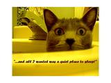 Cat capers 2