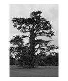 Tree in Salisbury  England