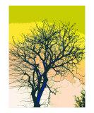 Illustrated Tree 2