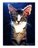 Sunlit Kitten